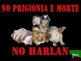 Harlan sfrutta vite in nome del denaro e non del progresso scientifico... vogliamo aprire gli occhi e accorgercene tutti quanti? Mentre noi stiamo ancora qui a domandarci se sia giusto o meno in quei luoghi di morte e sofferenza ci sono migliaia di vittime innocenti che subiscono le peggiori torture!