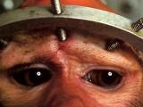 Vivisezione1
