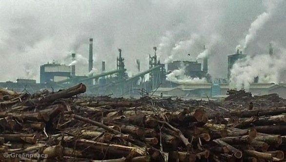 Stabilimento indonesiano per l'estrazione dell'olio di palma