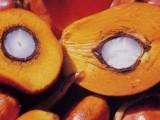 frutto olio di palma