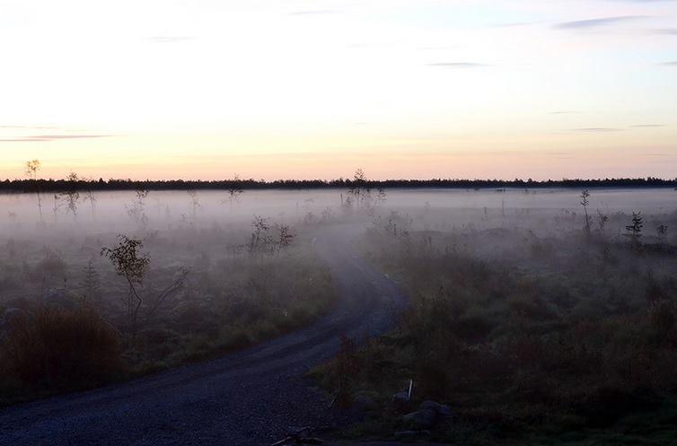 finlandia deforestazione