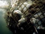 pesci in rete