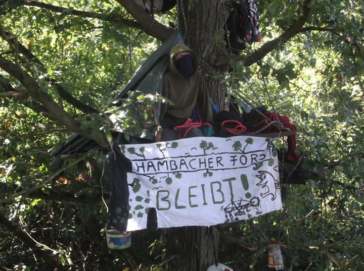 hambach occupazione alberi