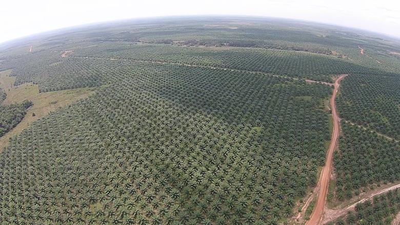 Una delle piantagioni della Poligrow vicino Mapiripán. Foto: Environmental Investigation Agency.