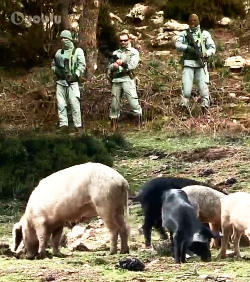 Peste-suina-500-maiali-abbattuti-in-Sardegna