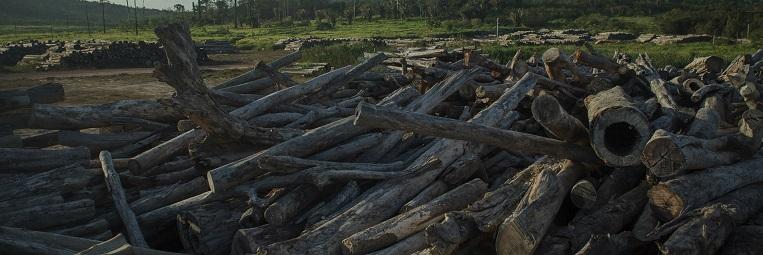belo_cut trees3