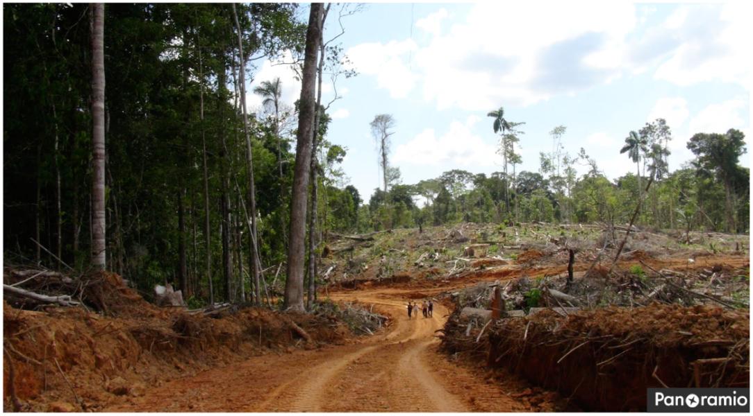 La deforestazione nella piantagione Stati Cacao nel 2013. Foto: Leoncio Ramirez via Panoramio.