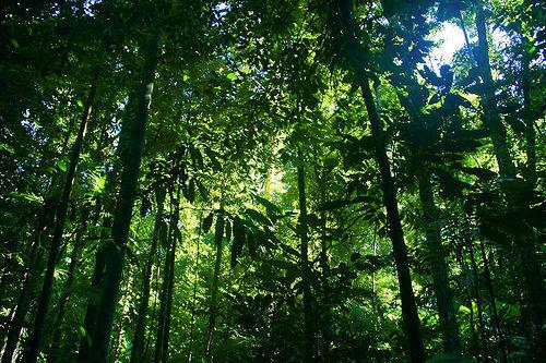 foresta congo