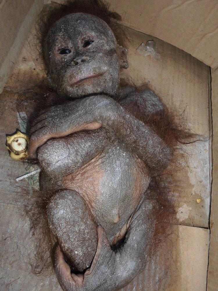 Gito, trovato abbandonato all'interno di una scatola in uno stato di semi mummificazione.