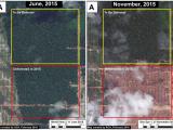 Immagini satellitari ad alta risoluzione mostrano viste sulla zona nord recentemente deforestata della piantagione prima e dopo. I ricercatori MAAP dicono che la foresta nella parte superiore del set di immagini verrà disboscata se Unitet Cacao continuerà con lo sviluppo della piantagione.