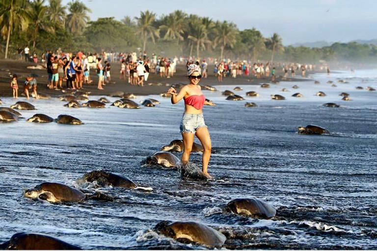 Una turista saltella in mezzo ai nidi delle tartarughe marine in Costa Rica, impedendo a molte di loro di deporre le uova.