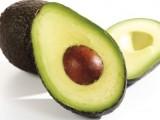 avocadorex-large_trans++An42fo-ub25UKGJAQWgg2VnMAtW2X2YSkPcdJ00KkQg