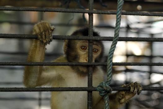 scimmie cocco2