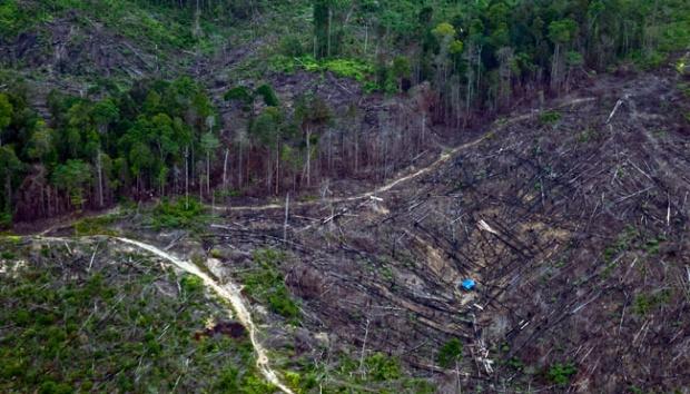 Deforestazione nella provincia di Riau