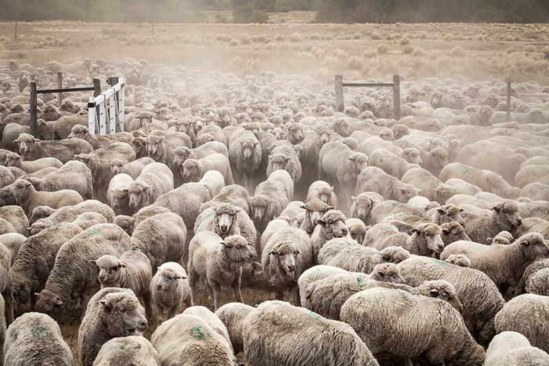 L'opera di neo-colonizzazione condotta dalla famiglia Benetton nella Patagonia argentina: terre strappate alle comunità Mapuche e convertite in allevamenti e luoghi di schiavitù.