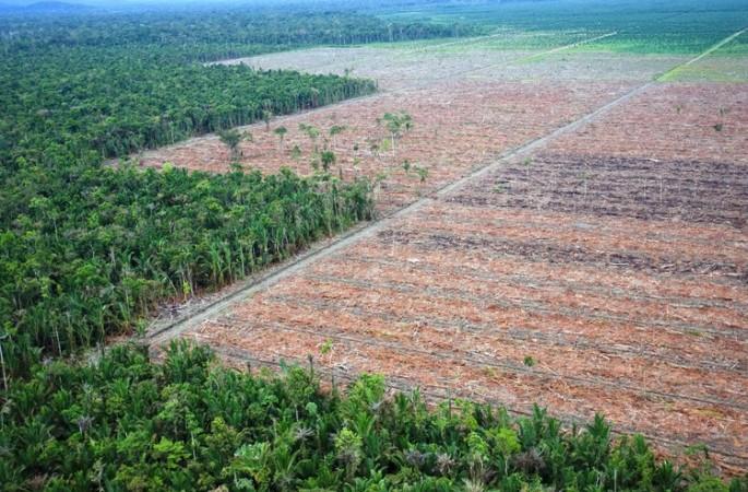 Nuova Guinea: l'isola supermercato