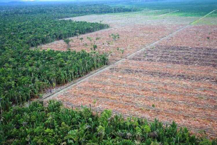 oil+palm