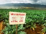 pesticide-e1463174545390-660x330
