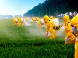 diffusione pesticidi
